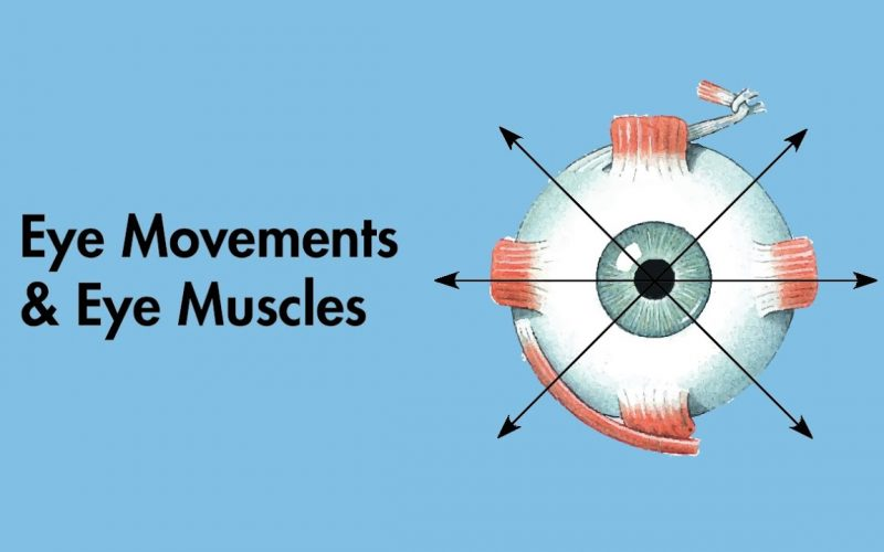 Cranial Nerves - Clinical Eye Movements (Cardinal Positions of Gaze) and Eye Muscle - MEDZCOOL